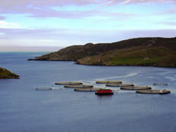 Assessment of whether fish farming effects Scottish tourism, Shetland, UK (SARF, 2008)