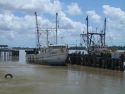 Improving sustainability in Suriname shrimp trawl sector