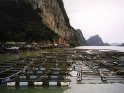 Grouper cages, Phang Na, Thailand (EC 2005)