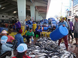 Tonggol purse Fisheries Improvement Plan, Thailand, SFP, 2011