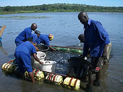 Value-chain analysis of Ugandan aquaculture (2011)