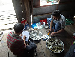 Blue swimming crab stock assessment programme, Kien Giang FIP, Vietnam (WWF/VASEP), 2014