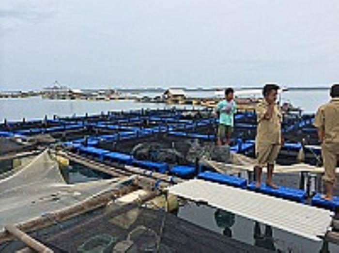 development fisheries sustainable thesis tuna