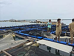 Blue growth development in Lombok, Indonesia (FAO, 2014)