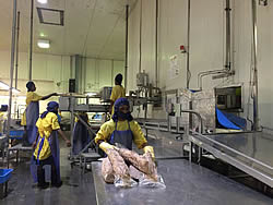 Tuna processing review, NFA/FFA, April, 2016