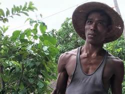 Evaluation of coastal livelihoods project in Myanmar (2018)