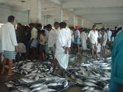 Cox's Bazaar, Bangladesh, Fisheries Sector Review (DFID, 2002)