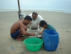 Sorting post-larvae shrimp in Chittagong, Bangladesh (Fisheries Futures, 2001)
