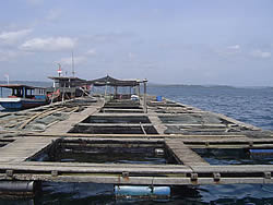 Economic evaluation of grouper cage systems, Pulau Tello, N.Sumatra (ADB, 2007)