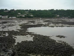 Bottom mussel culture in Ireland (environmental assessment. BIM, 2007)