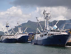Tuna purse seiners, Victoria, Seychelles, EC tuna tagging evaluation, 2009
