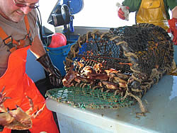 Crab and lobster vessel observation trip, Ramsgate, UK (Private wind farm developer, 2005)